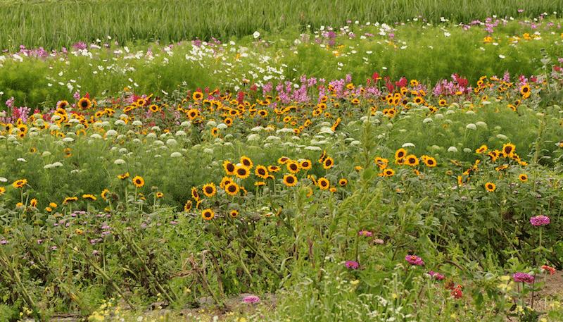 Bartlett's Farm on Nantucket