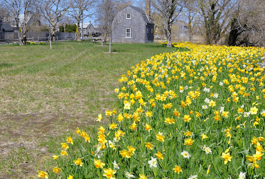 Arthur's Park on Nantucket