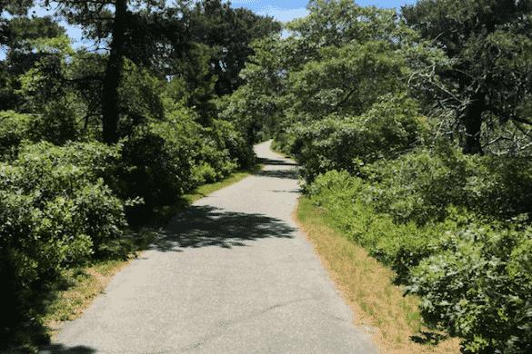 Wallet on Nantucket Bike Path