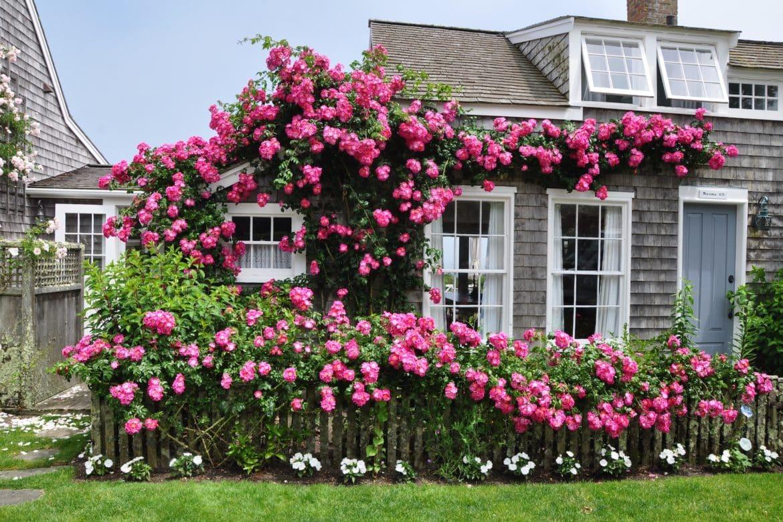 Nantucket Rose Cottage Sconset