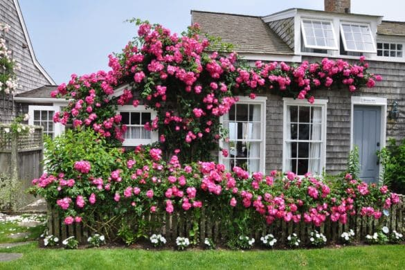 Nantucket Rose Cottage Sconset