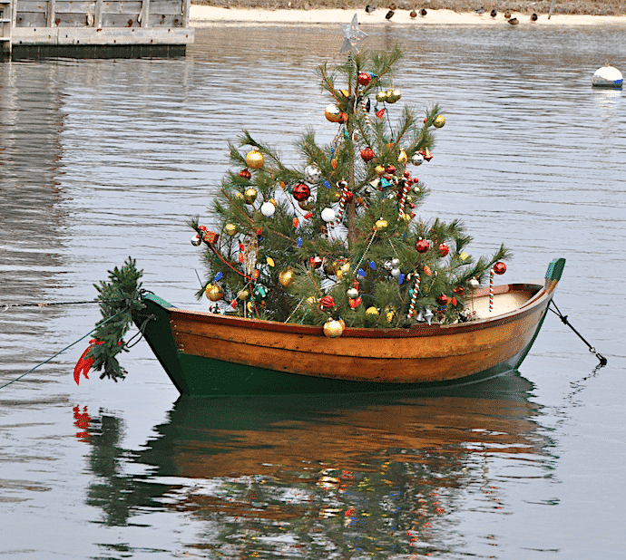 Christmas Tree in Dory