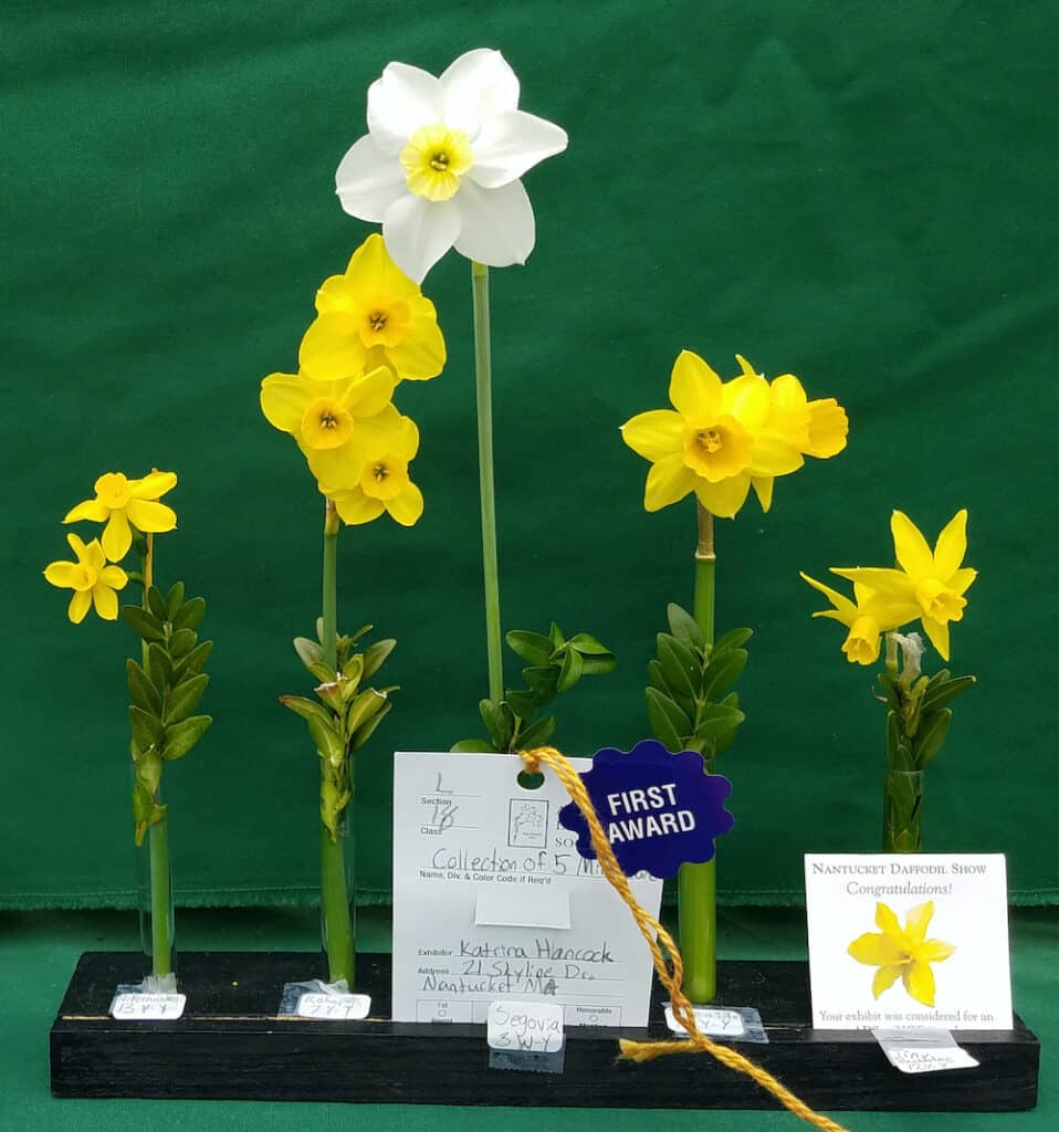 Daffodil Festival Winners